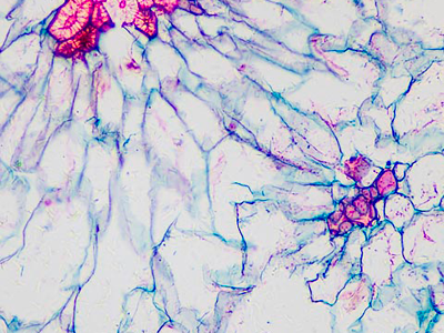 Mikroskopický preparát